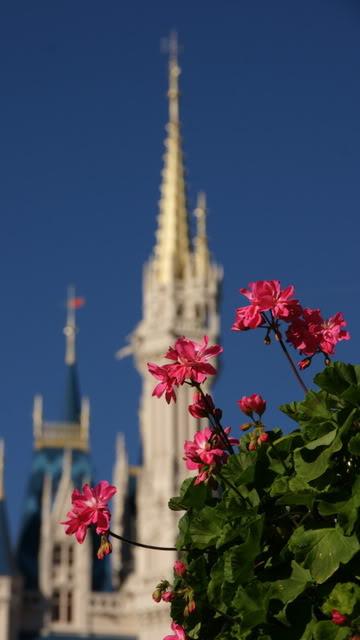 Springtime at Cinderella's Castle.