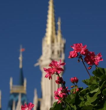 Disney Pic of the Week- Springtime at Cinderella's Castle