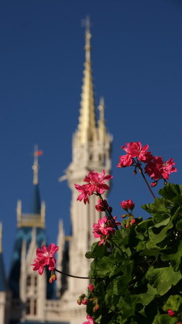 Springtime at Cinderella's Castle.